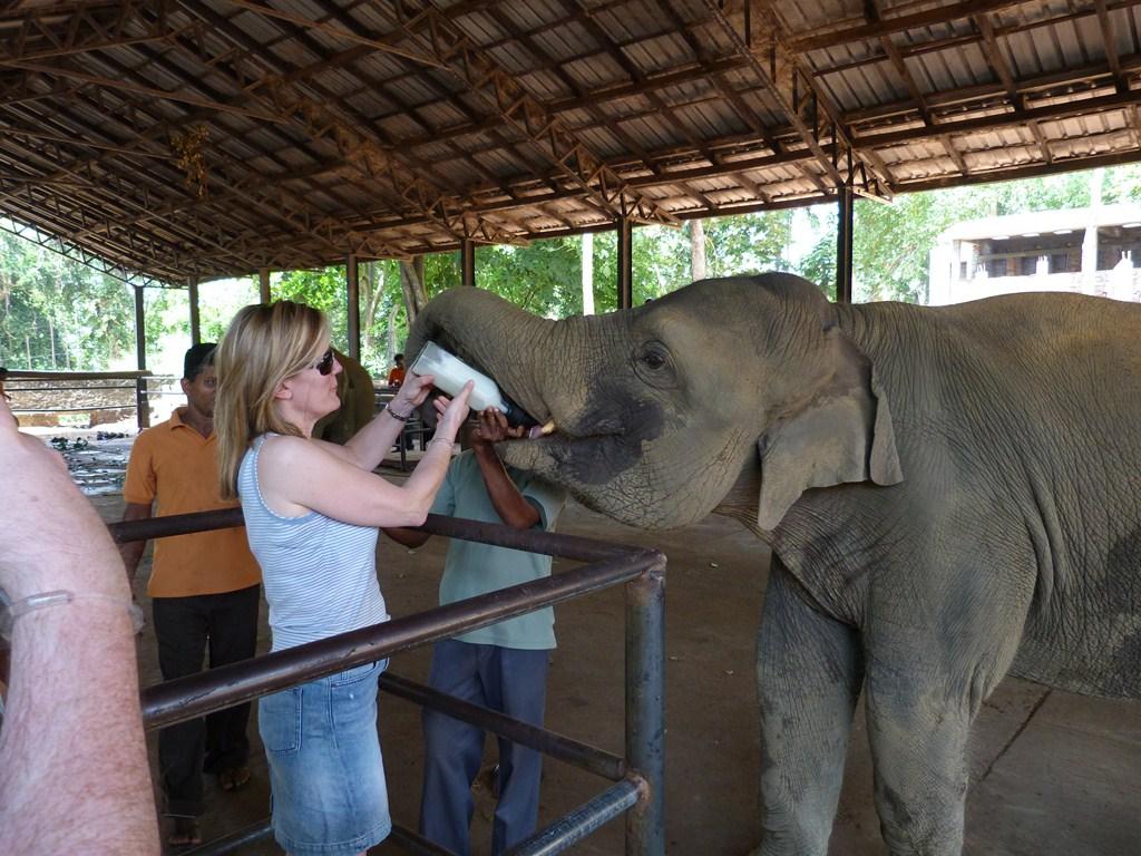 33. hranim un elefant (Copy)
