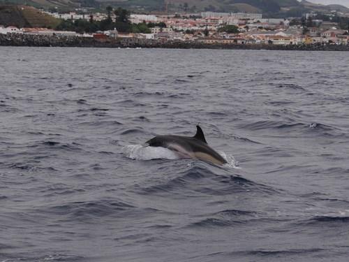 17. Delfini