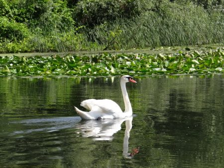 01. Lebada in Delta Dunarii