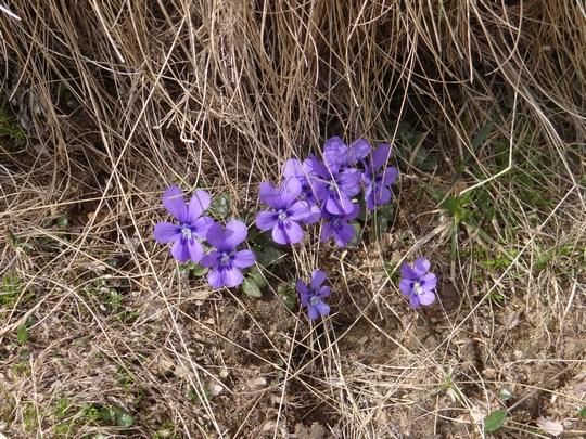 07. Flori de munte