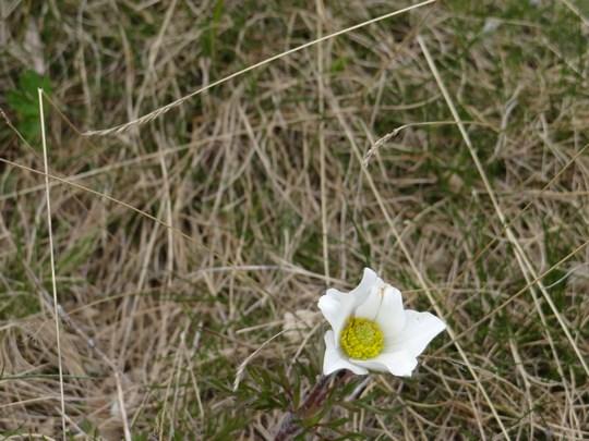 08. Flori de munte Bucegi