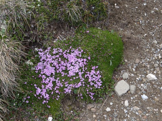 09. Flori violete