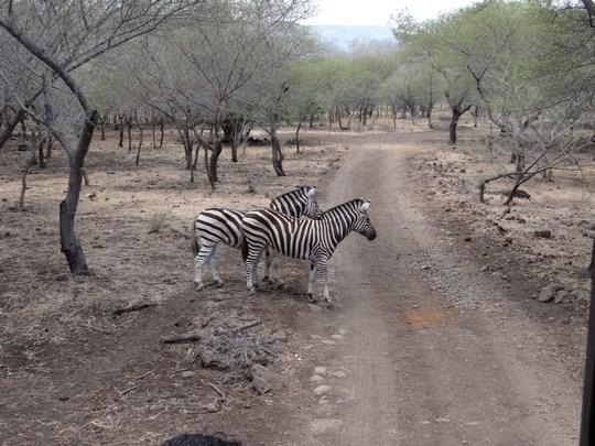 15. Traversati numai pe zebra