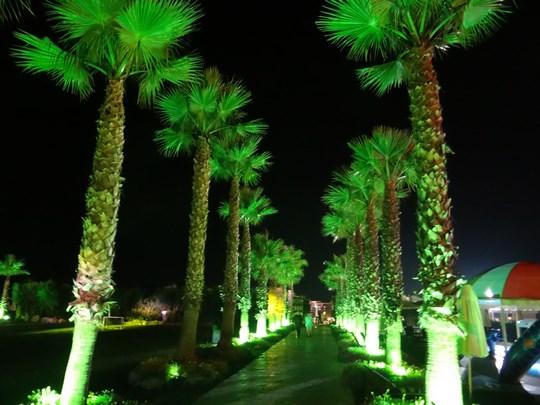 37. Palmieri luminati noaptea