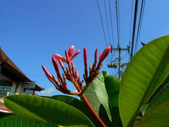 01. Flori Bali