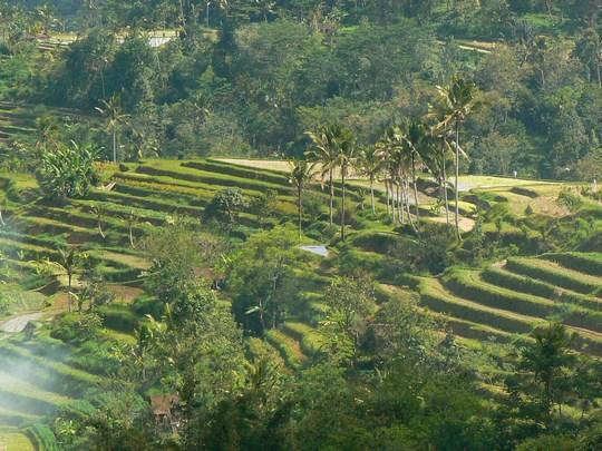 03. Orezarii Bali