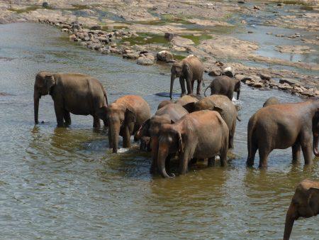 09. Orfelinatul de elefanti din Sri Lanka