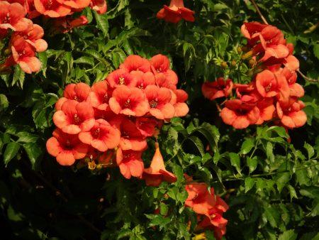 28. Flori frumoase