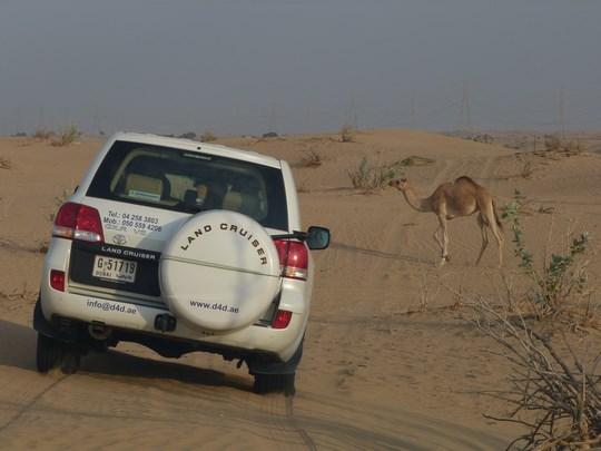 08. Desert Safari - Dubai