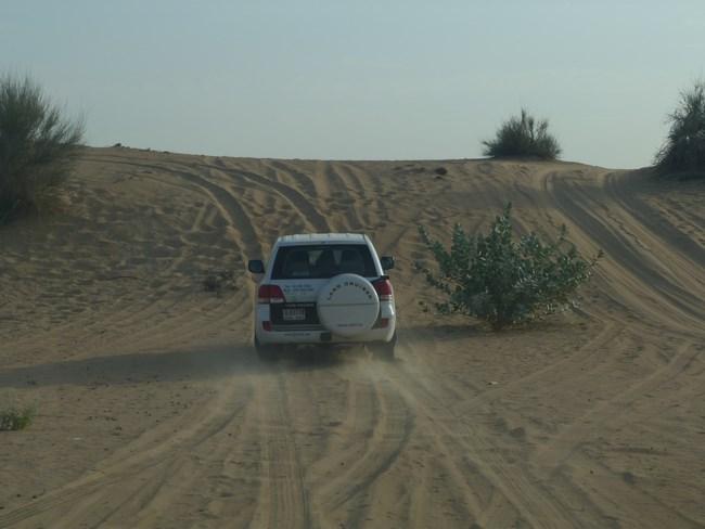 05. Desert safari