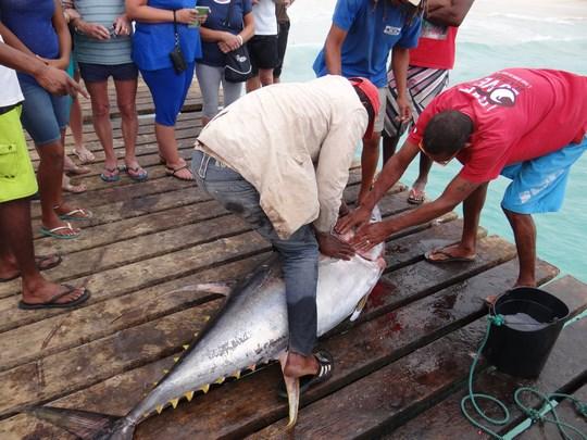 16. Pescuit de ton