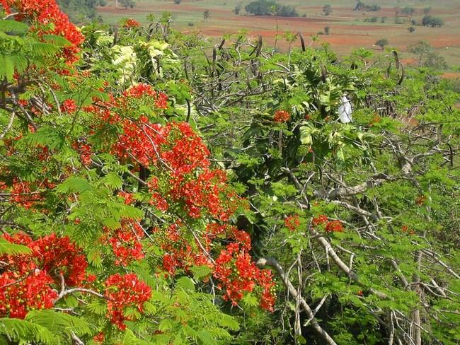 12. Flori Cuba
