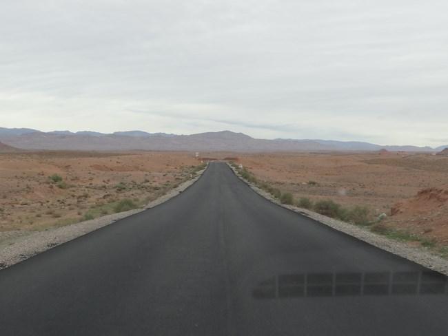 02. Sosea in desert