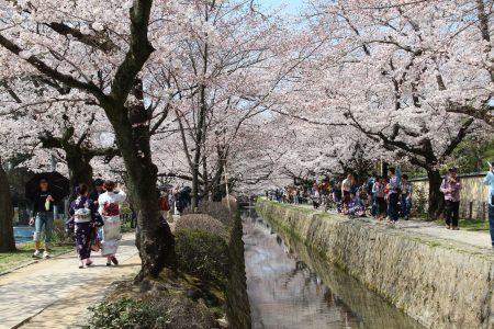 04. Sakura on Philosophers Path- Kyoto