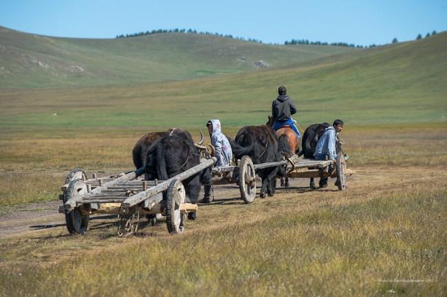 09. Iaci in Mongolia