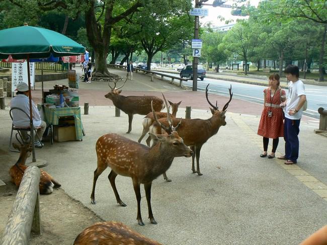 10. Cerbii din Nara