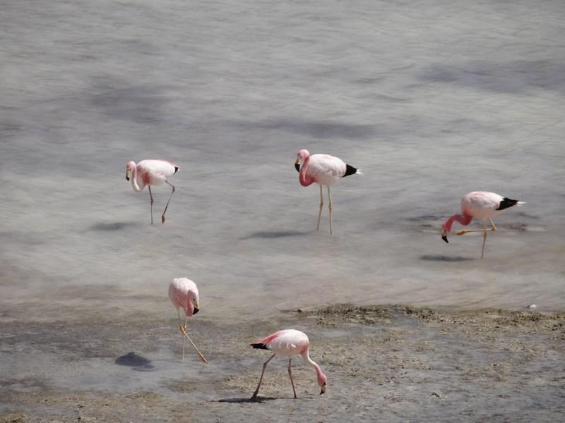 10. Flamingo