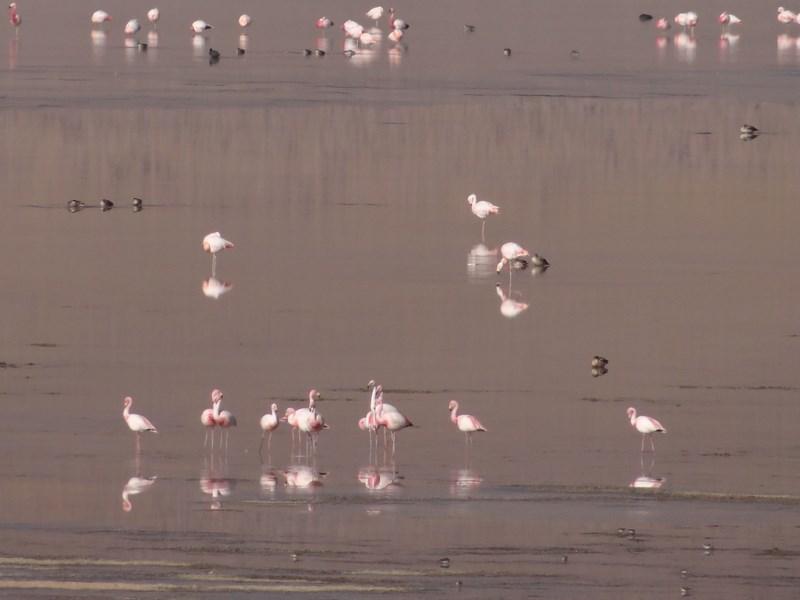 11. Flamingo Bolivia