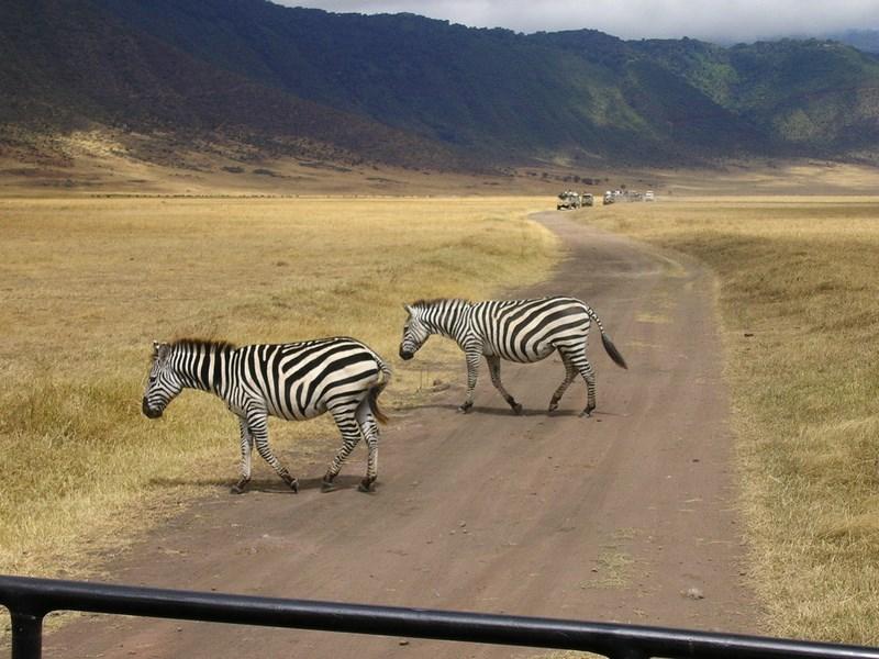 01. Zebre - Serengeti