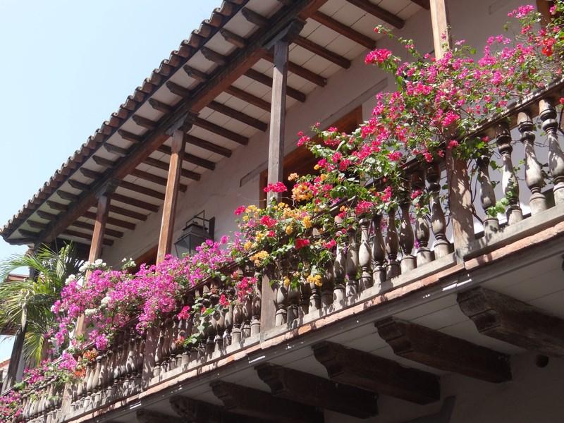 05. Flori la Cartagena