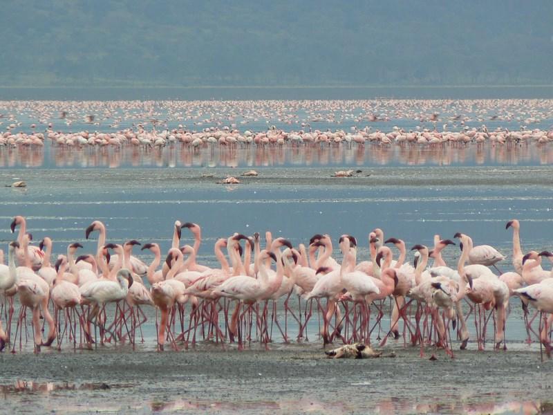 05. Nakuru Lake