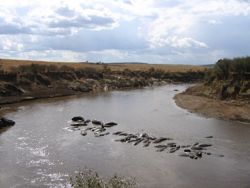 08. Hipopotami