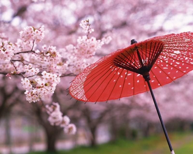10. Flori de cires