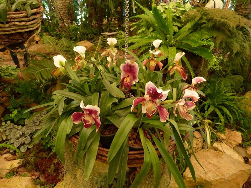 15. Orhidee thailandeze