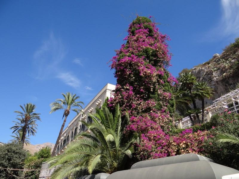 19. Copac cu flori