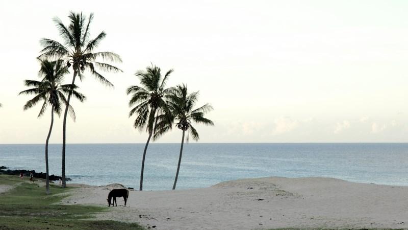 19. Plaja - Insula Pastelui