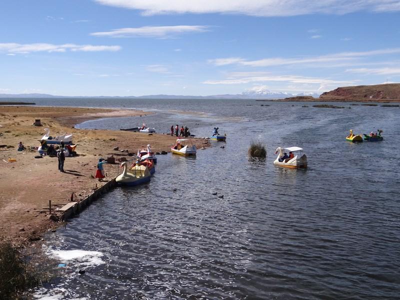 30. Lebede Titicaca