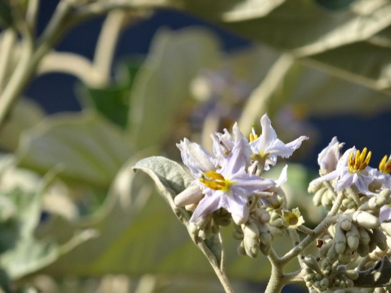 34. Orhidee