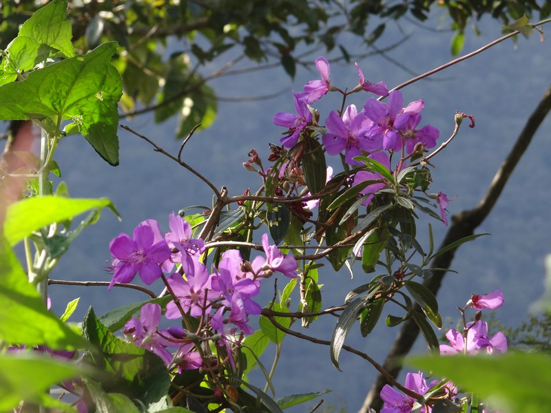 35. Flori violete