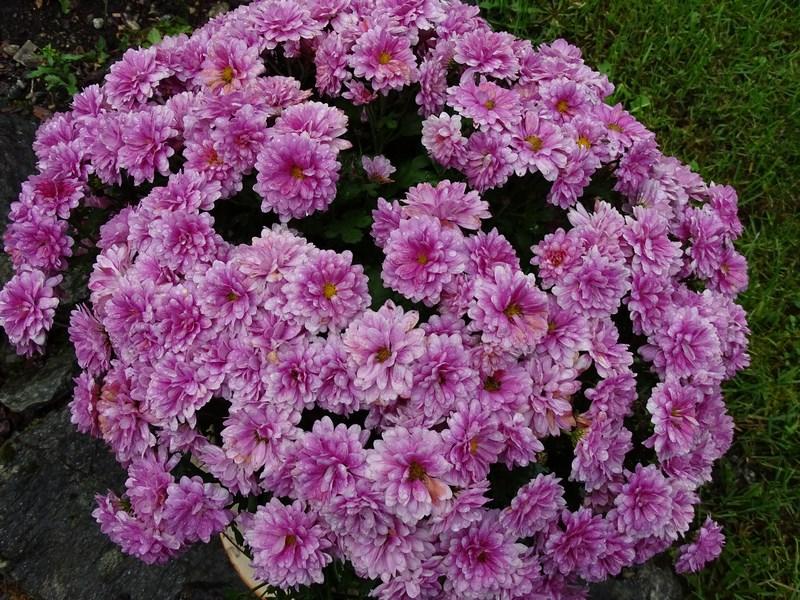 48-flori-norvegia