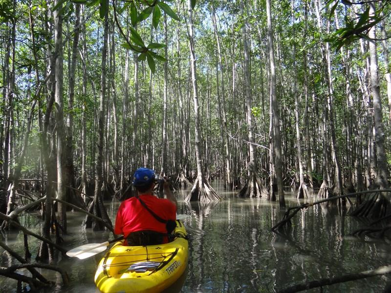 19-costa-rica-america-centrala-mangrove