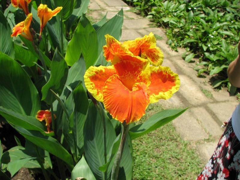02-gradina-botanica-singapore