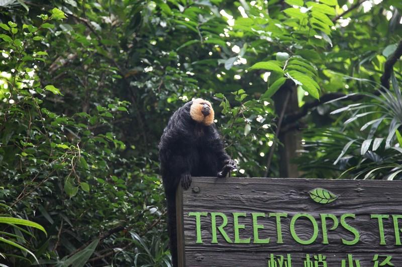 03-zoo-singapore