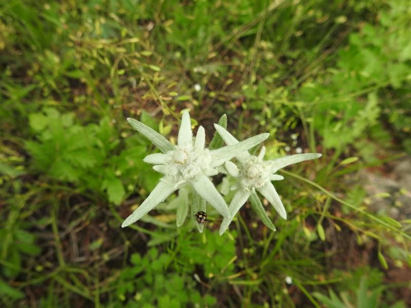 30-floare-de-colt