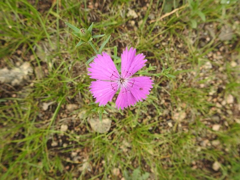 31-floare-mov