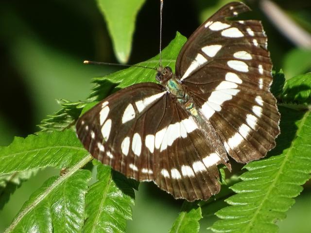 54-fluture-taiwan