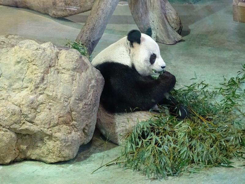 24. Panda Taipei