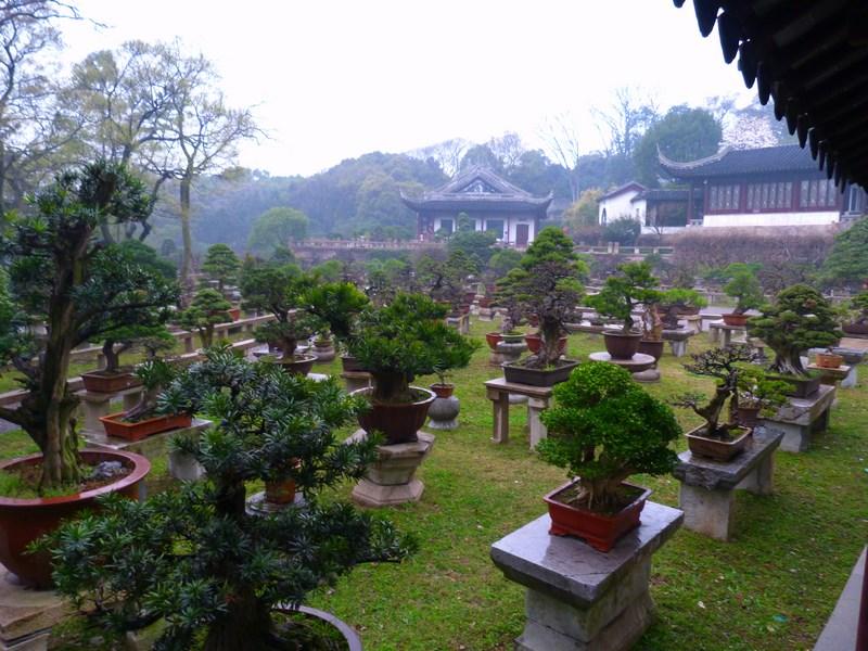 03. Gradina Suzhou
