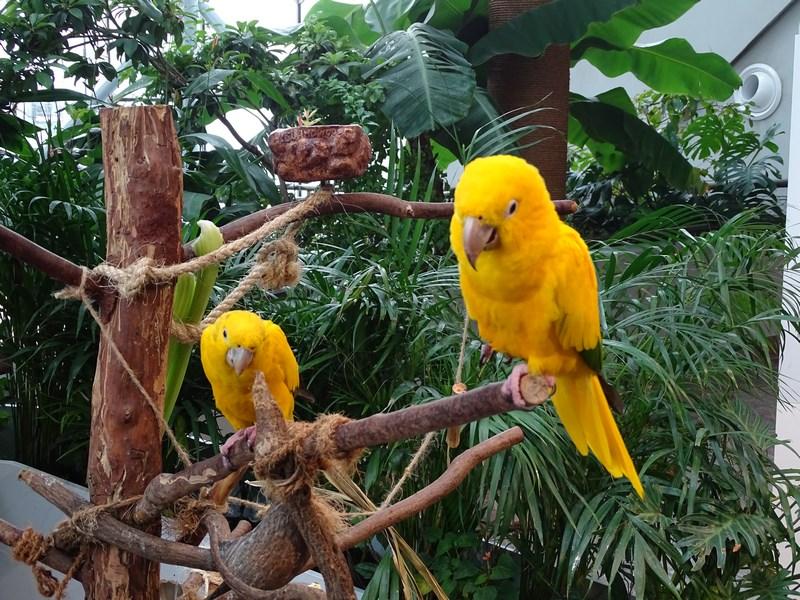 07. Papagali