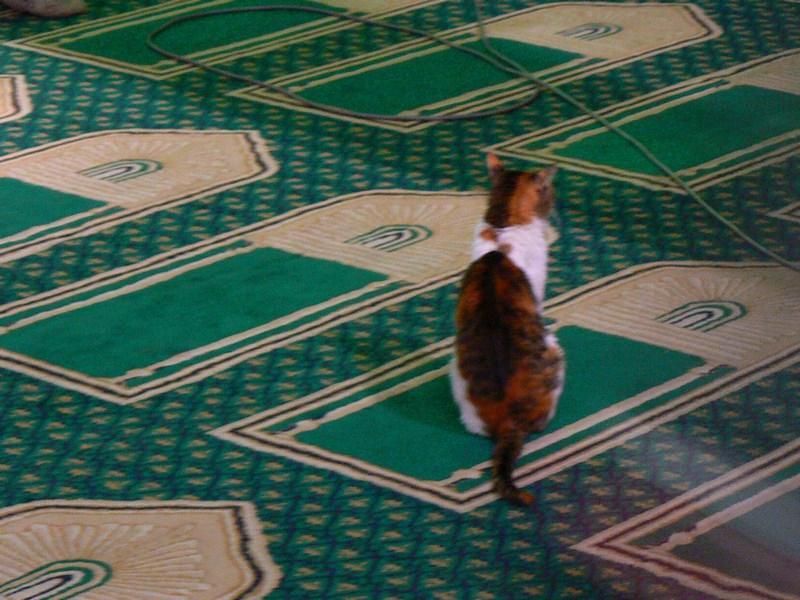 17. Pisica credincioasa
