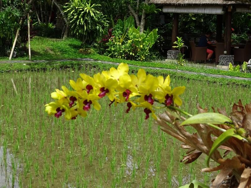 20. Orhidee