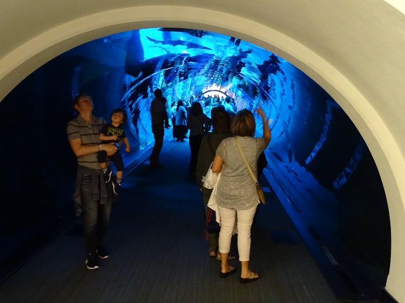 26. Dubai Aquarium