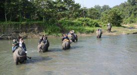 131. Safari Elefanti Nepal