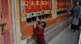 24. Noile Generatii De Tibetani