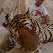 9. Cu Tigrul