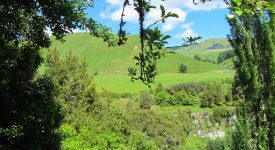 1. Pe Langa Rotorua Ne Intampina Un Verde Crud